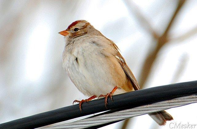 Birding in January – 23/52