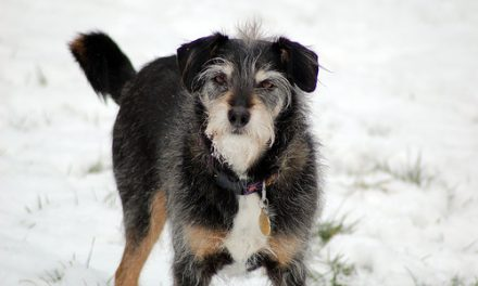 Goodbye My Hardy Dog