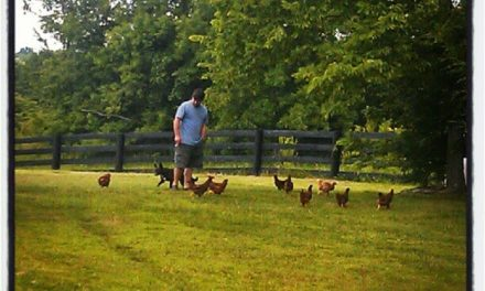Chicken Training for Lois Lane