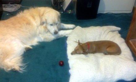Giant Dawg & Chiweenie