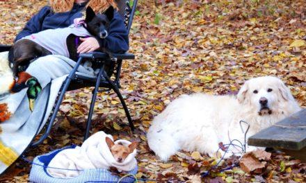 Loving Pets Bella Canister