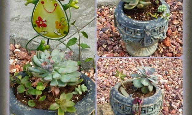 Succulent Arrangements