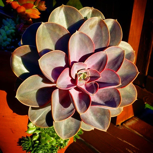 End of summer succulents… They sure grew a lot!
