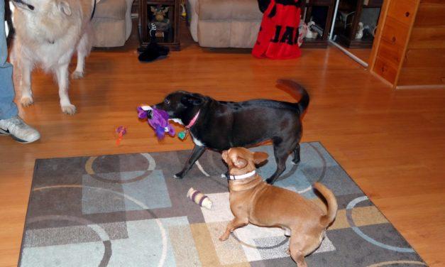 """""""Hear Doggy"""" Dog Toy"""