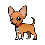 LB the Chiweenie